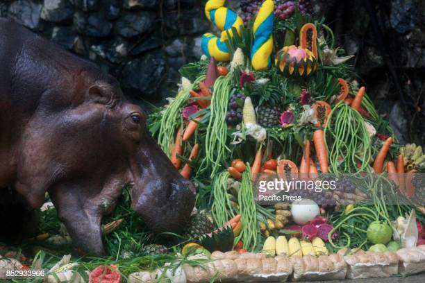Hippopotamus nickname 'Mali' while eating during Dusit Zoo Special events Happy birthday anniversary for the Hippopotamus nickname 'Mali' age 51...