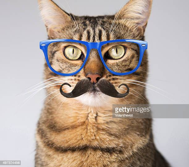 Hipster tabby cat in blue glasses and mustache