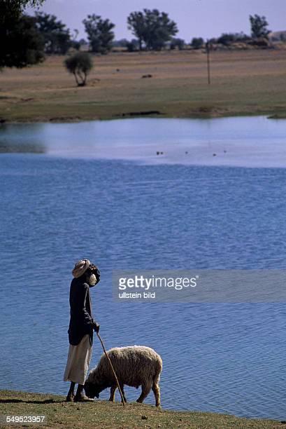Hirte mit Schaf an kleinem See in Wueste Thar Rajasthan