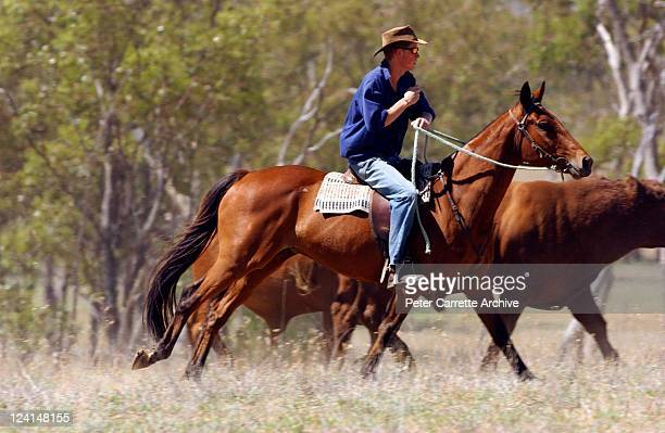 His Royal Highness Prince Harry herding bulls on his horse 'Guardsman' while working as a Jackaroo on a cattle ranch on November 27 2003 in...