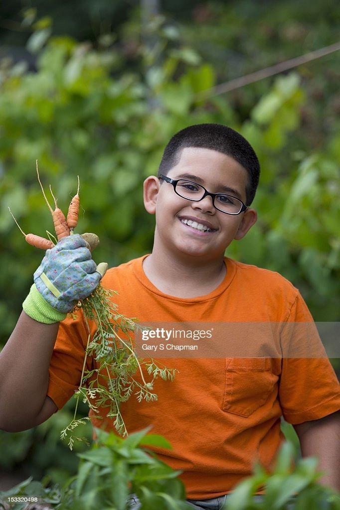 Hispanic boy picking carrots : Stock Photo