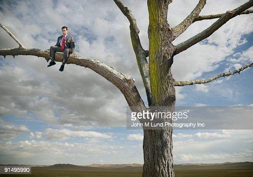 Hispanic businessman sitting in tree in remote area