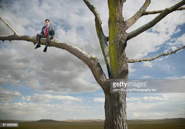 Hispanic businessman sitting in tree in remote area