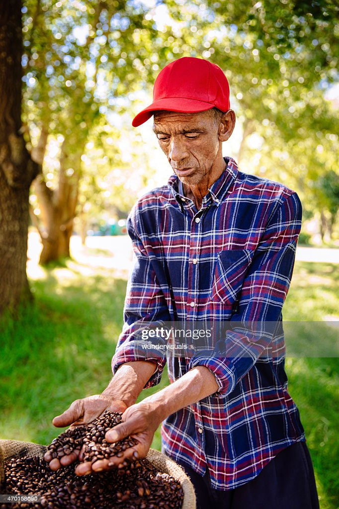 Hispanic farmer inspecting his crop of coffee