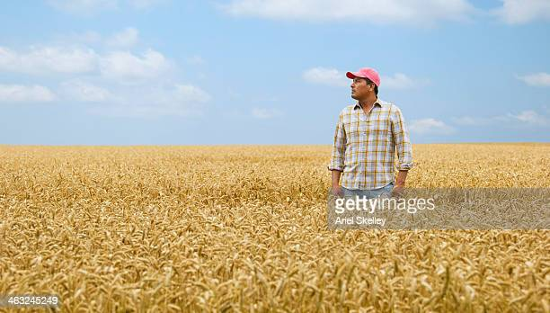 Hispanic farmer standing in wheat field