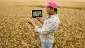 Hispanic farmer with digital tablet in crop field