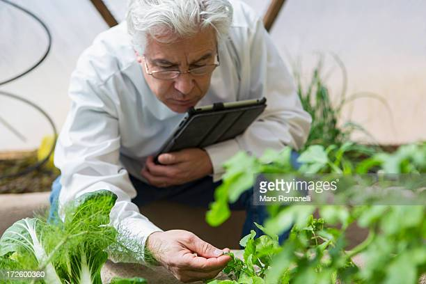 Hispanic scientist examining plants in greenhouse