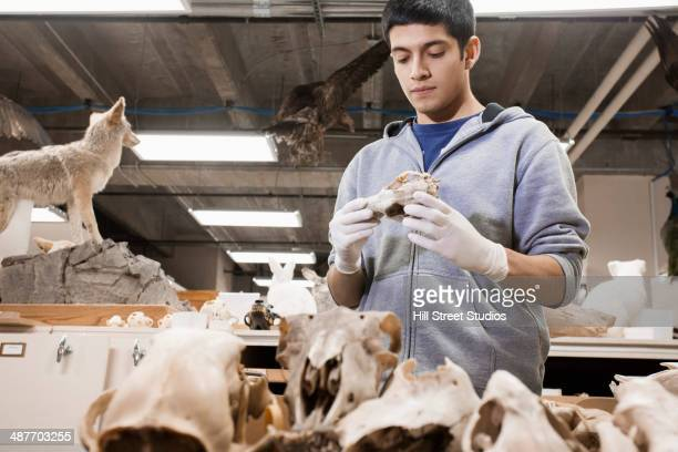 Hispanic student examining bones in lab
