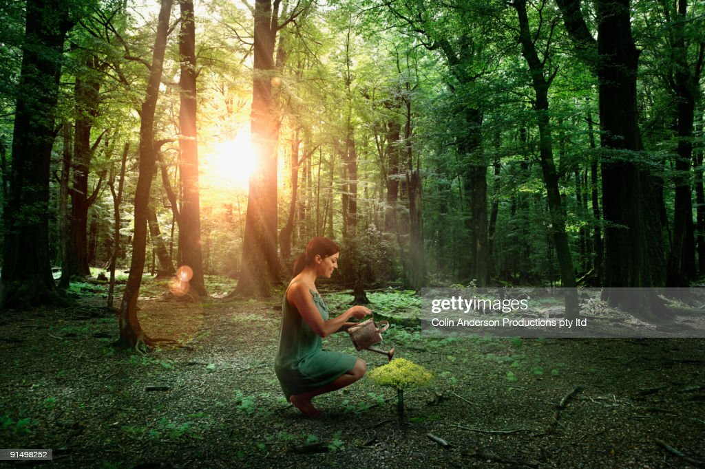 Hispanic woman watering young tree in forest