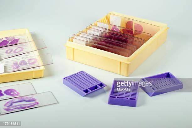 Histologie Rutschen und Kassette