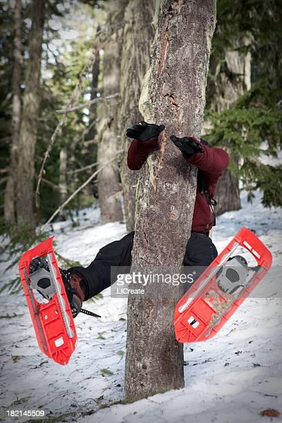 Auf einem Baum auf Schneeschuhen