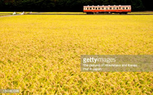 Hitachinaka seaside railway : Stock Photo