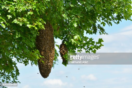 Hive, Honey Bees