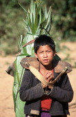 Hmong boy carries the harvest back to the village of Ban Long Mai a day's walk from Muang Sing in Luang Nam Tha province Northern Laos These...