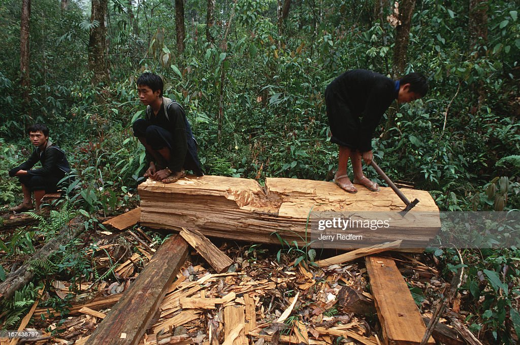 Hmong boys goof around atop a log in the jungle of northern Vietnam. The boys spend their days cutting up sandalwood trees felled by older men. Logging is illegal in the Hoang Lien Son Nature Reserve, but a slab of rare sandalwood can fetch $20-$100, as much as a Hmong family can make in a year of rice farming..