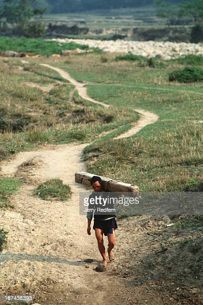 Hmong man carries a slab of sandalwood weighing about 40 kilos out of the Hoang Lien Son Nature Reserve in northern Vietnam Hmong men cut the trees...