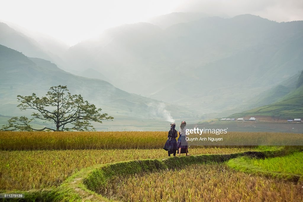 Hmong people on rice fields, north Vietnam