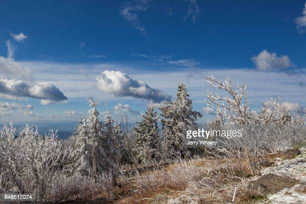 Hoarfrost on Trees, Clingmans Dome, Great Smoky Mountains NP