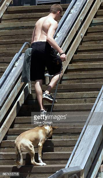 'Hobo' reluctantly walks up the stairs to the Ventura Pier behind owner James Brady 21 a native of Ventura who is attending school in Berkeley