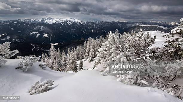 Hochschwab Range with a winter forest covered in deep snow, Mt Wildkamm, Murzsteg Alps, Styria, Austria