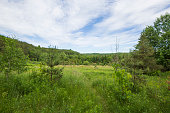 Hockley Valley Forest Meadow