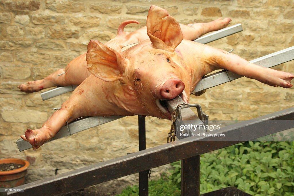 Hog roast : Stock Photo