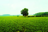 Hokkaido Furano Tree