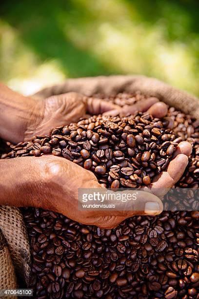 Tenant une culture du café, les grains aromatiques torréfiés