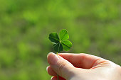 This is a picture that has a four leaf clover natural.