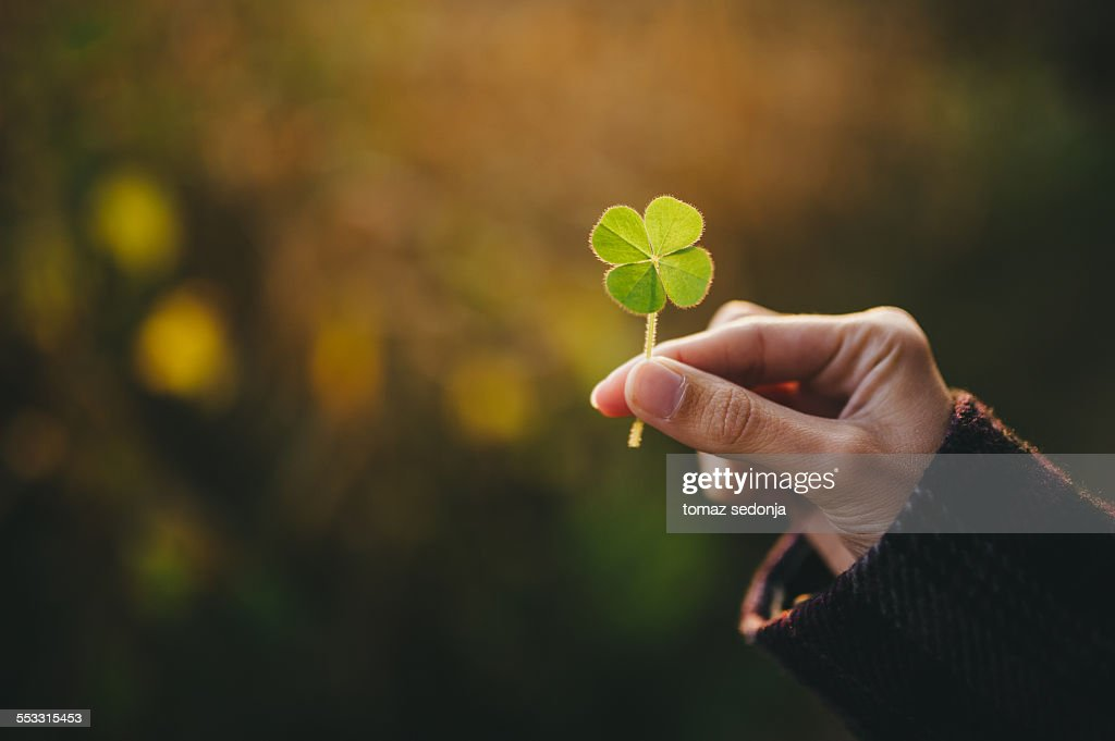 Holding a four-leaf clover : Stock-Foto