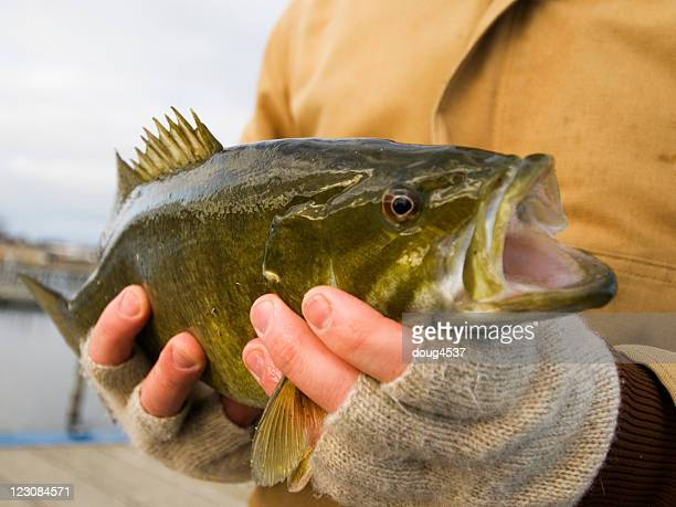 Holding a Smallmouth Bass