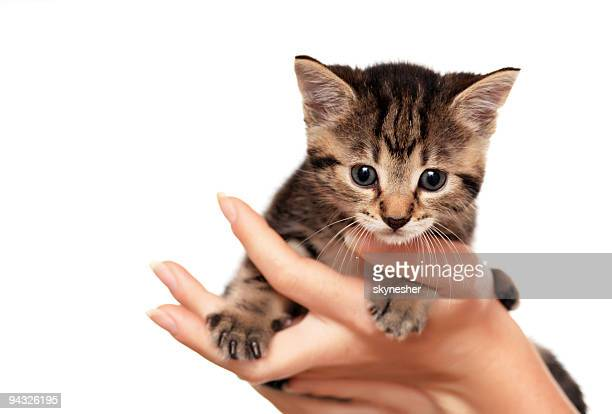 Holding cute little cat.
