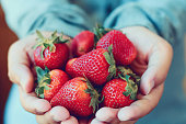 holding fresh strawberry in hands vintage tone