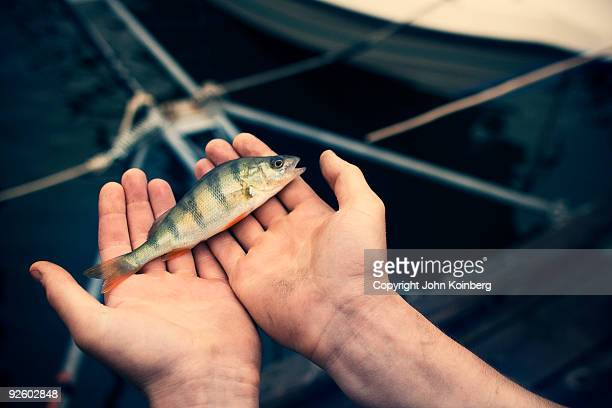 Holding Small Perch