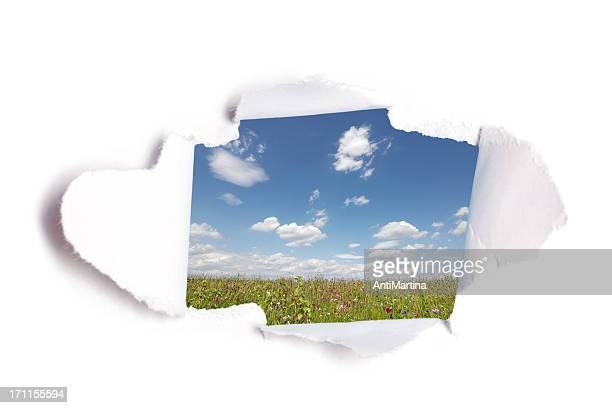 hole in paper with view to summer meadow