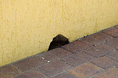 Hole in the wall near the floor. The mouse mink.
