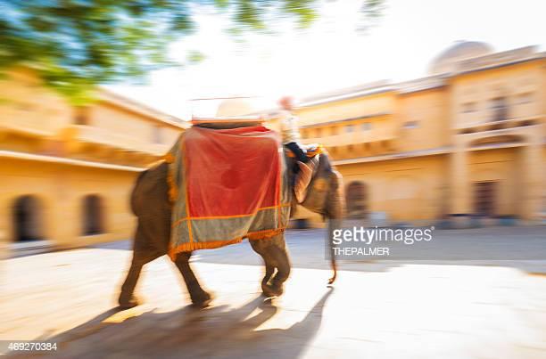 ホリ(春祭)インド象