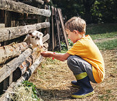 Holidays in the country - little boy feeds a goat
