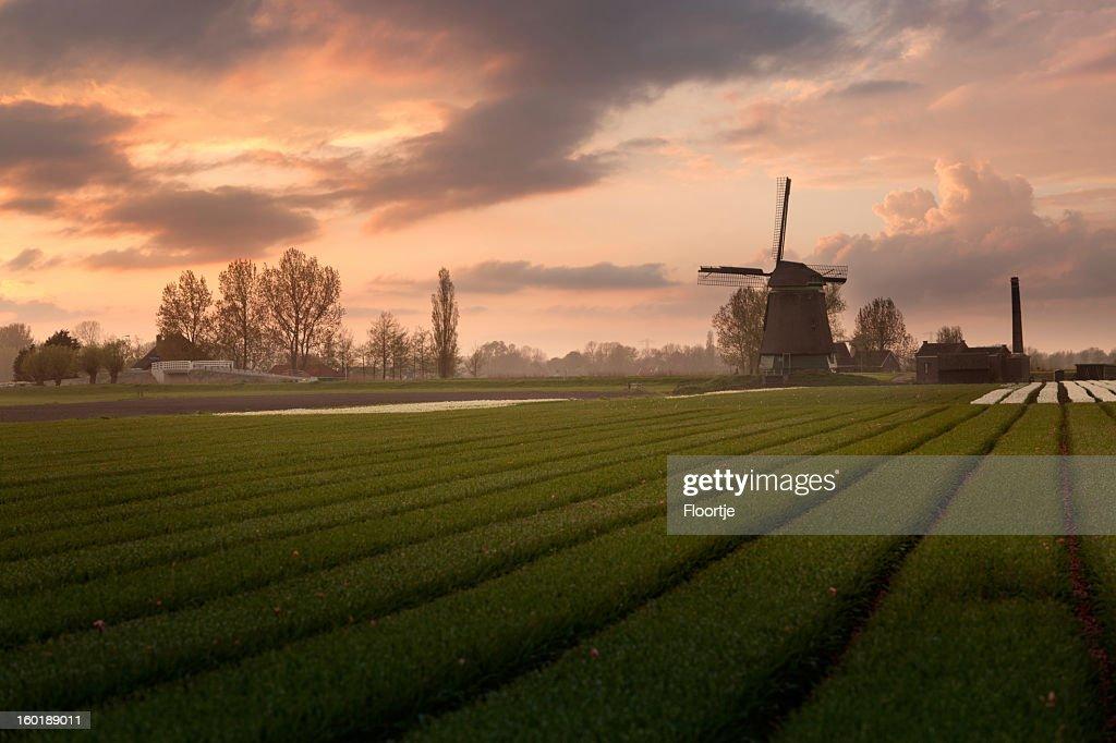 Holland: Dutch Windmills : Stock Photo
