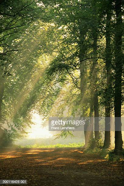 Holland, North Holland, 's-Graveland, sunlight shining through trees