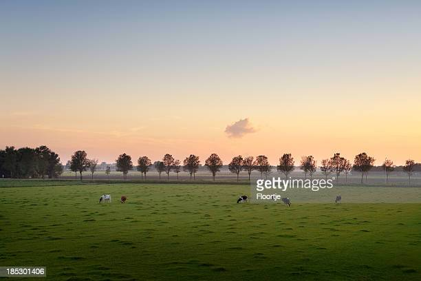 Holland: Polder