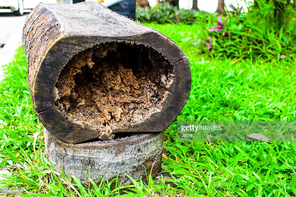 Hollow logs and grass seating. : Stock Photo