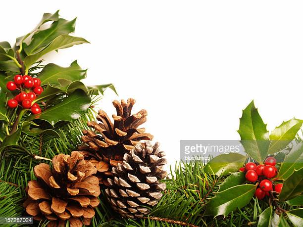 holly pine cone border