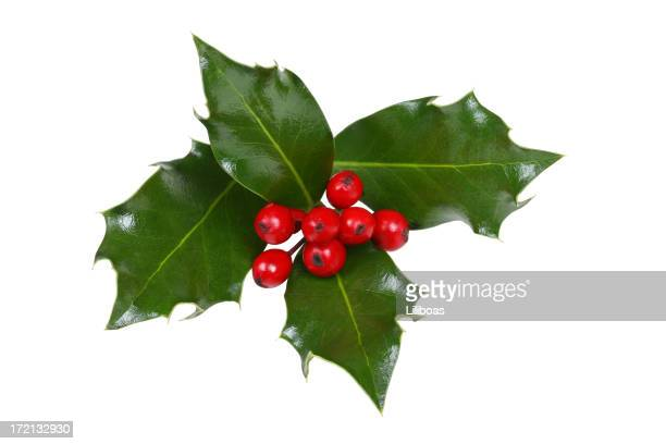 Holly Series (WITH A CLIPPING PATH!)