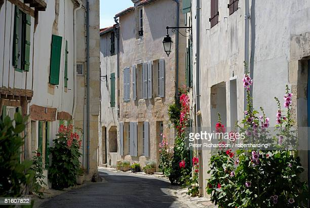 Hollyhocks lining a street, La Flotte, Ile de Re, Charente-Maritime, France, Europe