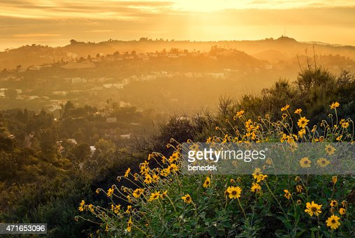Hollywood Hills Mountain Landscape with Flowers Los Angeles