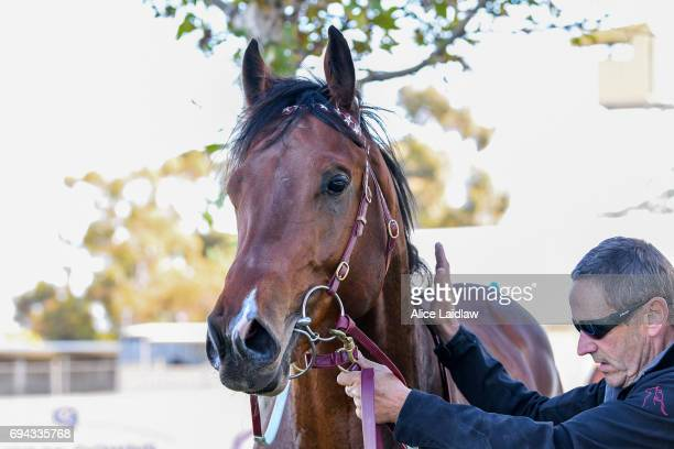 Holy Blade after winning the Murray Downs Golf Country Club 2YO Maiden Plate at Swan Hill Racecourse on June 10 2017 in Swan Hill Australia