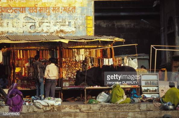 Holy cow in Nasik market in Nasik Maharashtra India The sacred city of Nasik is traversed by the Godavari the most sacred river of the Deccan Along...