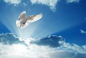 White dove in blue sky symbol of faith