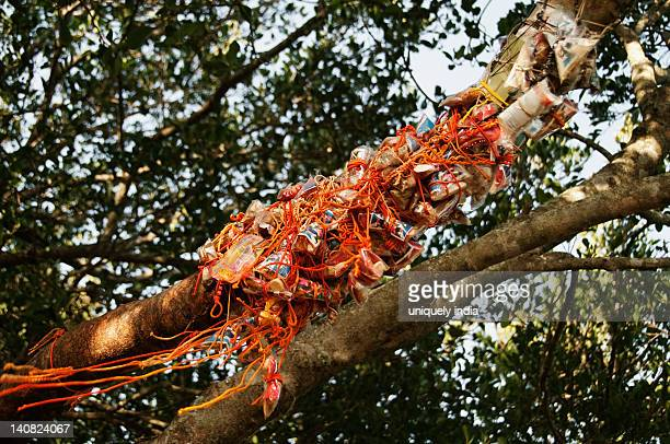 Holy threads tied on a tree, Tirupati, Chittoor District, Andhra Pradesh, India